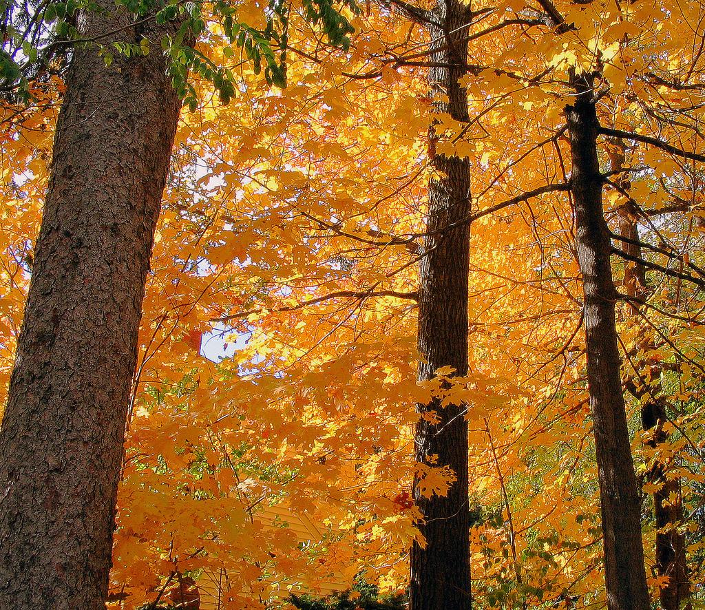 Красивые фотографии осенних листьев