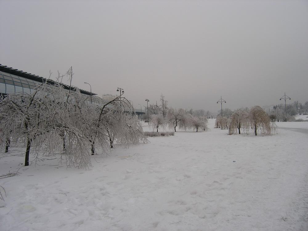 ледяной дождь, обледенелый, обледеневший