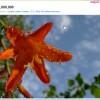 Бесплатные фото для вашего сайта на Flickr