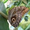Фото бабочек бесплатно