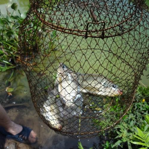 День 5-й. Рыбалка в Муйне