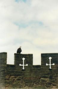 фото Англии, фотография Англии, бойница, кресты, орел, замок уорвик, крепостная стена, замок Уорик