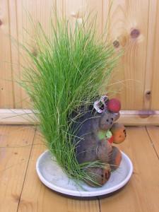травянчик, как ухаживать за травянчиком, фото травянчика