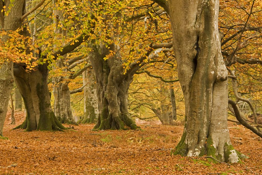 фото золотой осени, фото осеннего пейзажа, фото осеннего парка