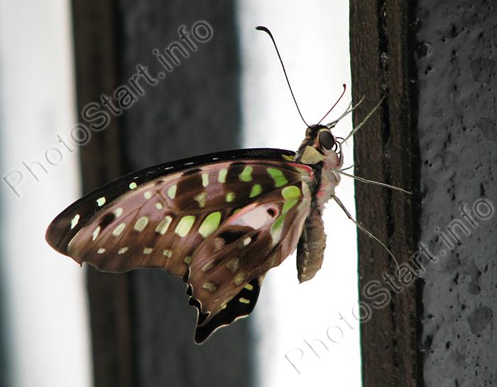 фото бабочек, фотографии бабочек, pictures of butterflies