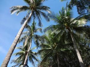 Пальмы - символ курорта в тропиках