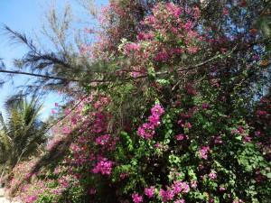 Цветущие деревья так и просятся в фотокамеру