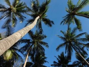 Опять пальмы. Куда ж без них